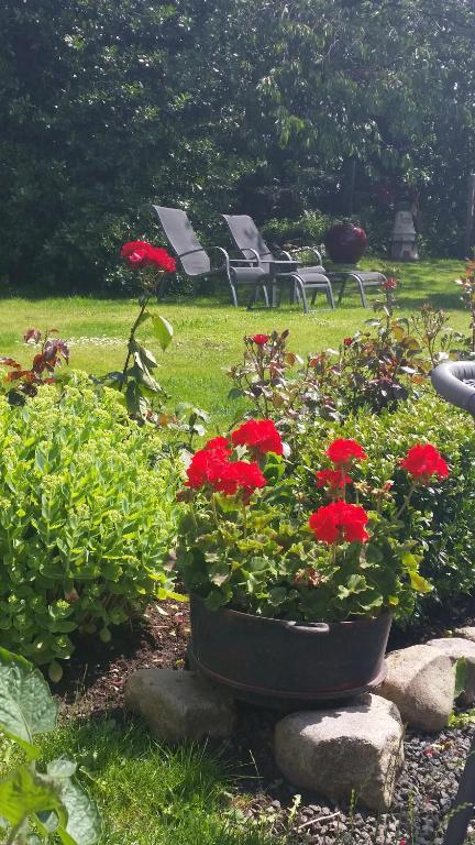 En trädgård utanför Borrby B&B
