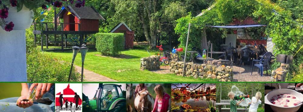Фермерский дом  Фермерский дом  Stutteri Skandihest Apartments