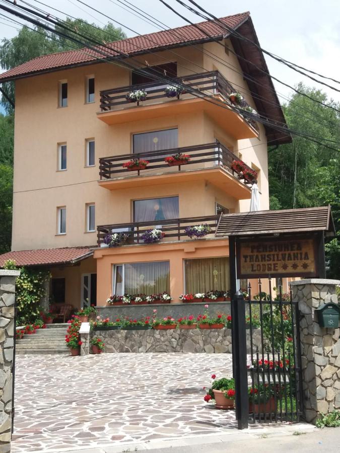 Гостевой дом  Pensiunea Transilvania Lodge