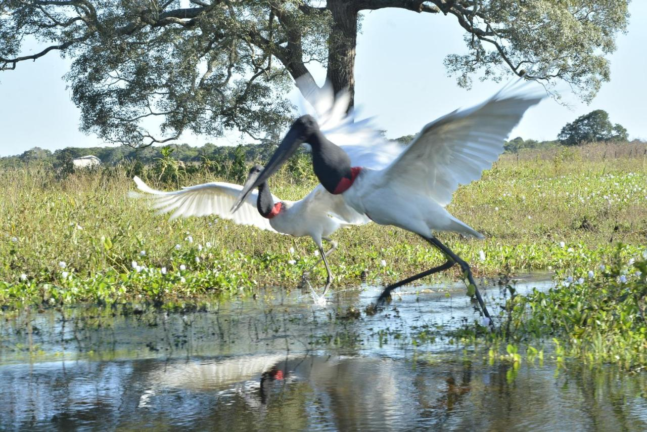 Poconé Hotel Pantanal - Foto Booking