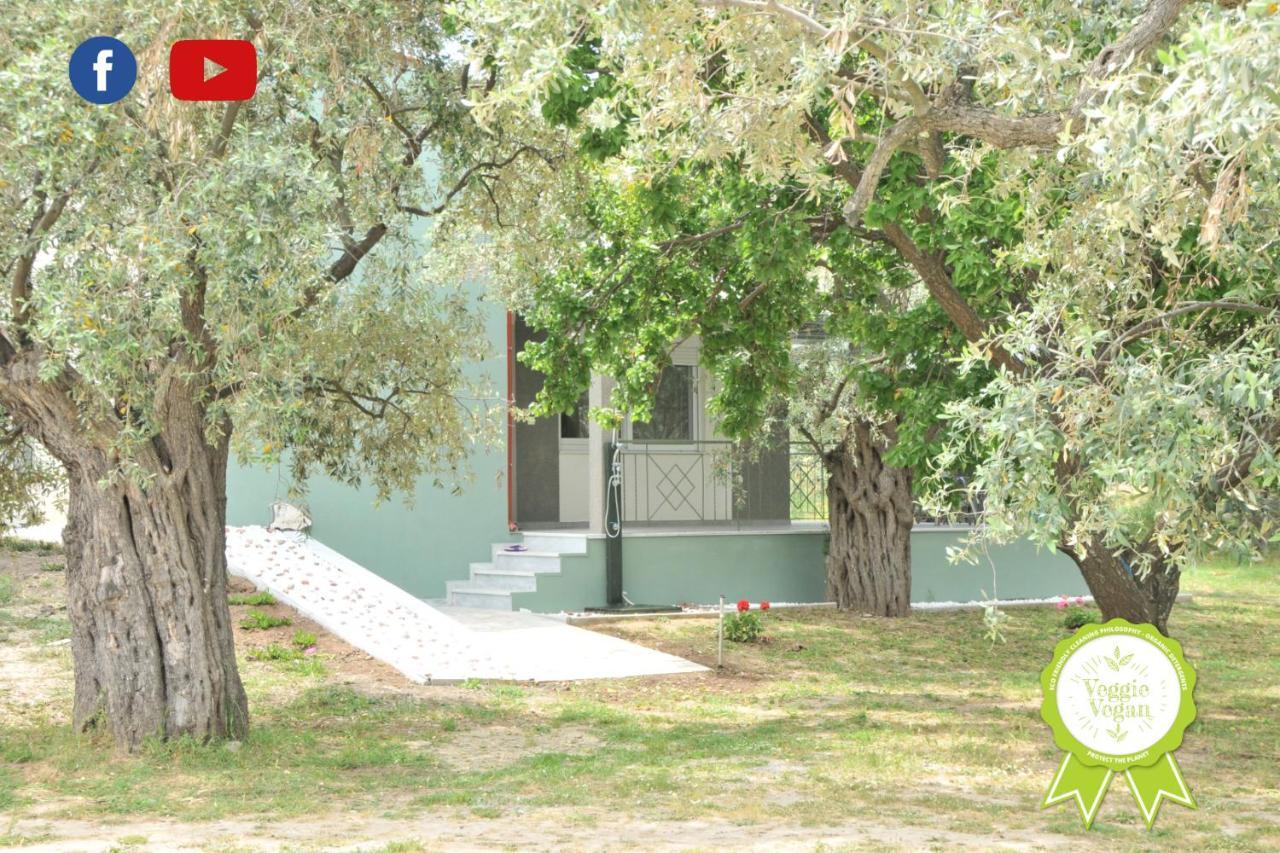 Фото  Дом для отпуска Elaeda Evdokia