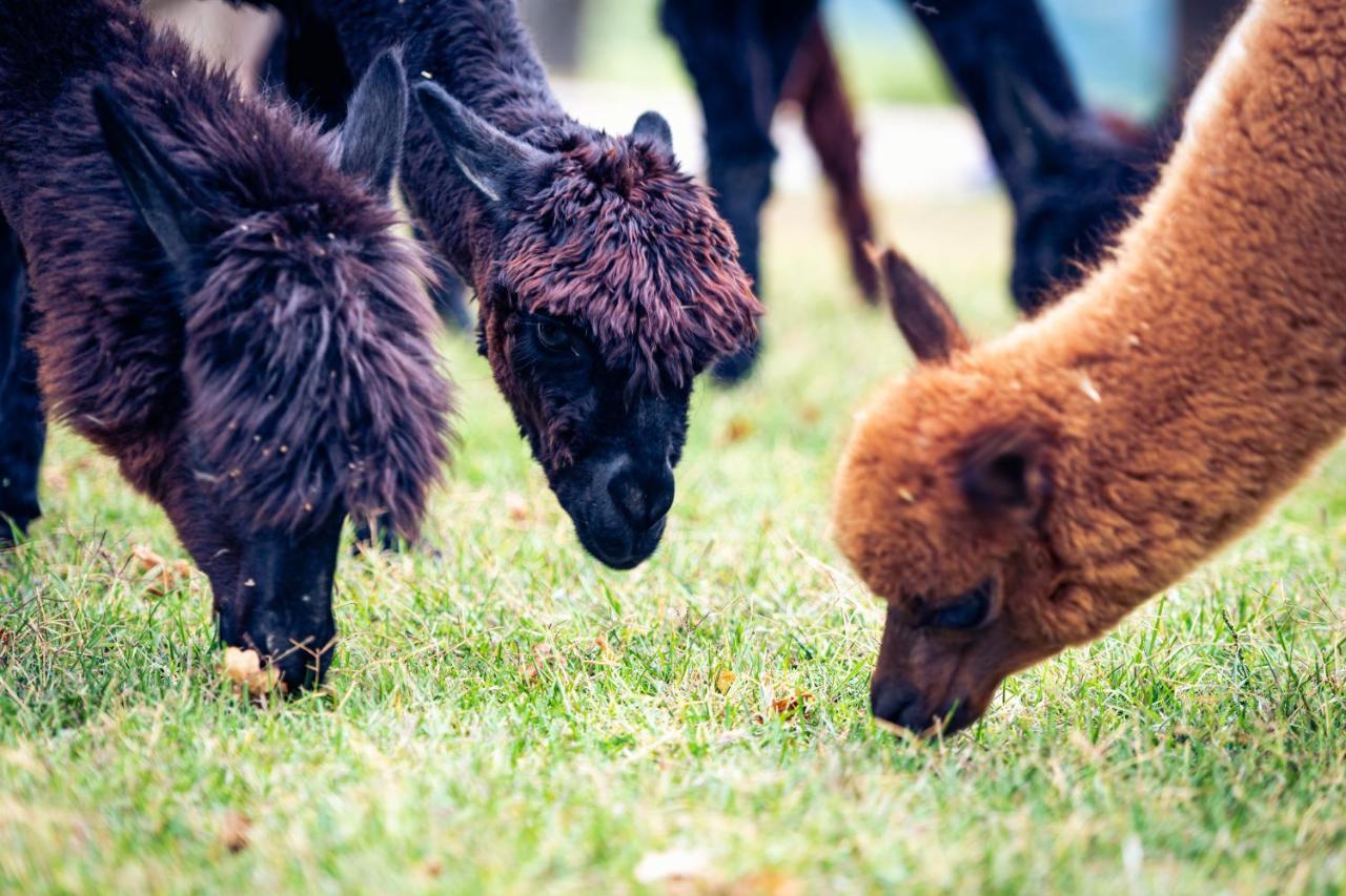 Фермерский дом  Agriturismo Il Beccafico Alpaca  - отзывы Booking