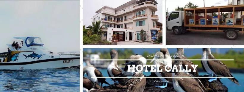 Отель  Hotel Cally