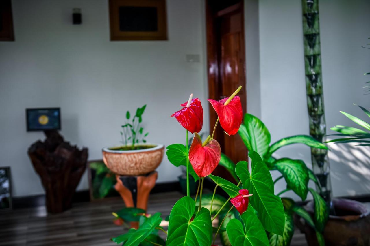 Отель Nehansa Resort & Safari - отзывы Booking