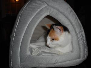 Animal ou animaux domestique(s) séjournant avec des clients dans l'établissement Côté's Bed & Breakfast