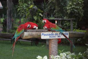 Animals at the guesthouse or nearby