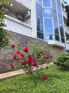 Сад в Студия в центре Сочи