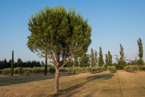 A garden outside Domaine De Fontbelle