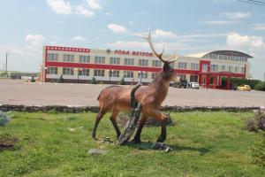 Животные в мотеле или окрестностях