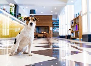 Pet or pets staying with guests at Hotel Lilla Roberts