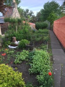 A garden outside Eden Cottage