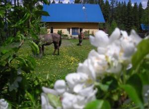 Tiere in diesem Ferienpark oder in der Nähe