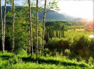 Naturlandschaft in der Nähe des Ferienparks
