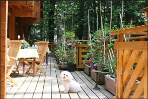 Animal ou animaux domestique(s) séjournant avec des clients dans l'établissement Hôtel la Maison d'Hôte