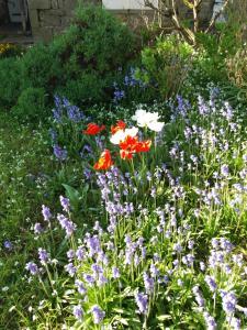 A garden outside Ellias