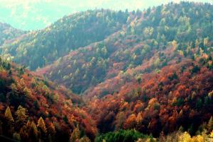 Príroda v okolí chaty v prírode
