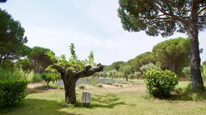 A garden outside Campagne les Jumeaux
