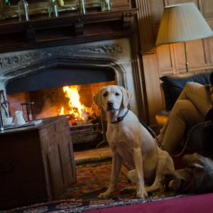 Pet or pets staying with guests at Woolley Grange - A Luxury Family Hotel