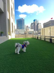 Pet or pets staying with guests at Hotel Nikko San Francisco