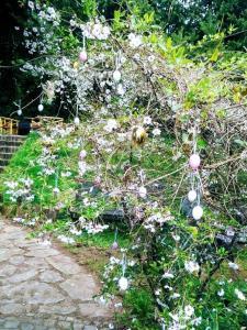 Een tuin van Ferienwohnungen Willrich