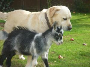 Pet or pets staying with guests at Barmston Farm