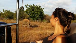 Guests staying at Elephants Fence Guest & Safari Services