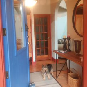 Pet or pets staying with guests at Sunshine Villa B&B