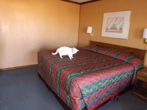 A bed or beds in a room at Tristar Inn Xpress
