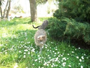 Altri animali domestici presso l'agriturismo o nei dintorni