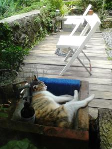 Pet or pets staying with guests at Jiufen Aromatherapy B&B