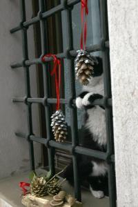 Altri animali domestici presso l'appartamento o nei dintorni