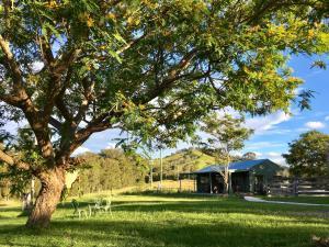 A garden outside Amamoor Lodge