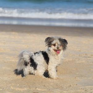 Pet or pets staying with guests at Pacific Vista Budget Retreat