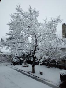 Pensiunea Magnolia iarna