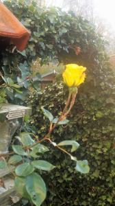 Een tuin van Bed & Breakfast Inndeberm