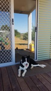 Pet or pets staying with guests at Orange Grove Gardens