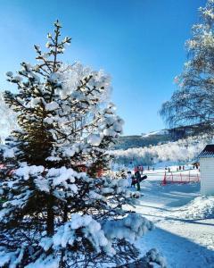 Cottage on Kurortnaya during the winter