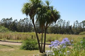 A garden outside Refugio del Angel