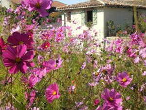 A garden outside Le Poulailler