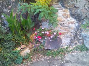 Zahrada ubytování Penzion Marjánka