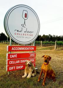 Pet or pets staying with guests at Red Door Collective - RDC Estate