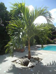 A piscina localizada em Happy Turtle Apartments ou nos arredores