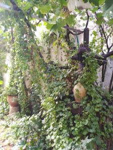 Um jardim no exterior de El Sueño de Lucrecia