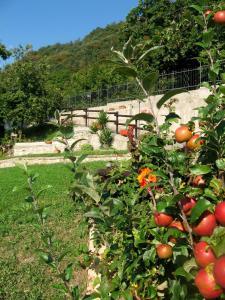 A garden outside Le Fiorini