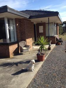 Pet or pets staying with guests at Yanakie Holiday House