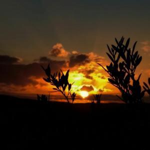 Blick auf den Sonnenuntergang/Sonnenaufgang von des Gasthauses aus oder aus der Nähe