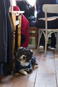 Pet or pets staying with guests at The Bull Hotel