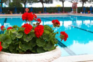 Bazén v ubytování Hotel Principe nebo v jeho okolí