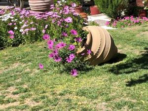 A garden outside Souris Hotel