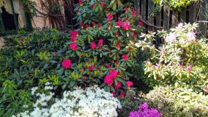 Ogród w obiekcie Słoneczne apartamenty